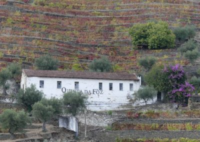 13. Vallée du Douro et Pinhao - Les Mollalpagas en cavale (20)