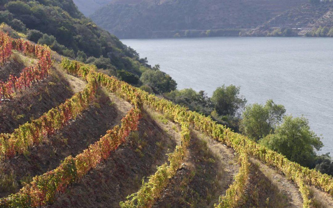3. Nord-est du Portugal et sa superbe vallée du Douro : du 25 octobre au 1er novembre 2018