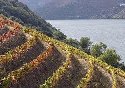 13. Vallée du Douro et Pinhao - Les Mollalpagas en cavale (41)
