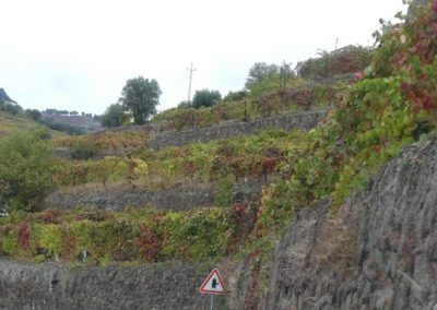 15. route vers Amarante - Les Mollalpagas en cavale (7)