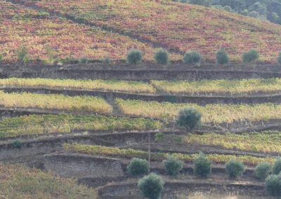 13. Vallée du Douro et Pinhao - Les Mollalpagas en cavale (12)
