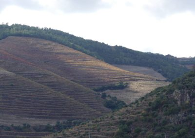 13. Vallée du Douro et Pinhao - Les Mollalpagas en cavale (8)