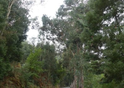 15. route vers Amarante - Les Mollalpagas en cavale (17)