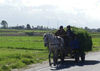 42. Route vers Casablanca - Les Mollalpagas en cavale (13)