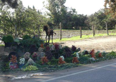 42. Route vers Casablanca - Les Mollalpagas en cavale (17)