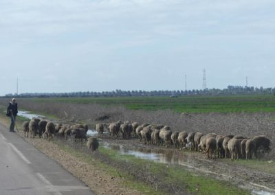 42. Route vers Casablanca - Les Mollalpagas en cavale (6)