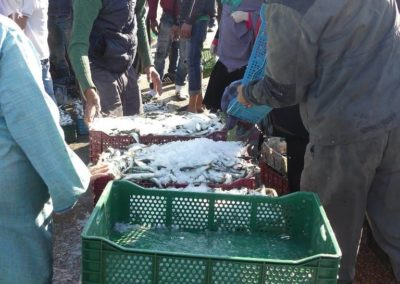 45. Essaouira - Les Mollalpagas en cavale (31)
