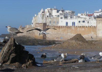 45. Essaouira - Les Mollalpagas en cavale (57)