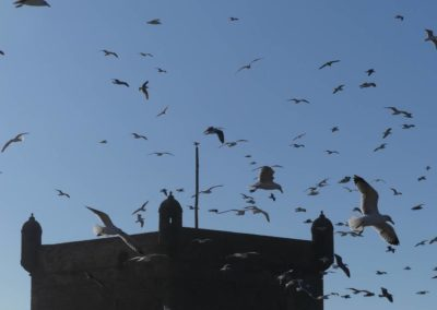 45. Essaouira - Les Mollalpagas en cavale (59)