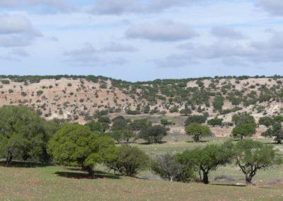 46. Route vers Agadir - Les Mollalpagas en cavale (15)
