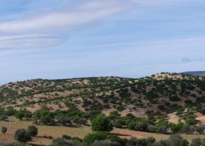 46. Route vers Agadir - Les Mollalpagas en cavale (25)