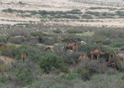 46. Route vers Agadir - Les Mollalpagas en cavale (44)