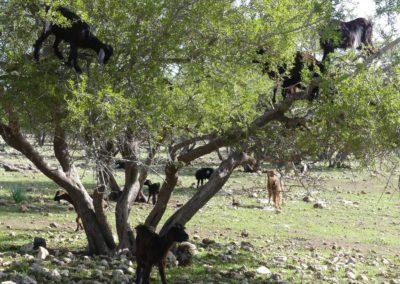 46. Route vers Agadir - Les Mollalpagas en cavale (9)