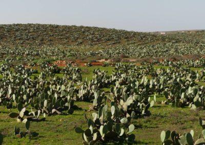 55. Route vers oasis de Tighmert - Les Mollalpagas en cavale (15)