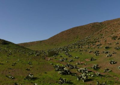 55. Route vers oasis de Tighmert - Les Mollalpagas en cavale (2)