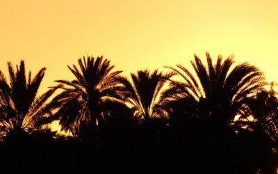9. Maroc : du 5 au 9 décembre 2018 (les oasis de Tighmert, de Taghjicht et de Amtoudi)