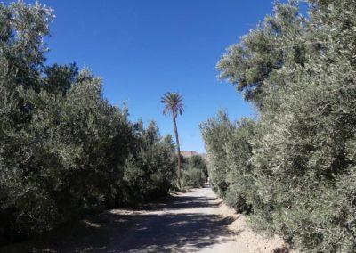 61. Route vers Tafraoute - Les Mollalpagas en cavale (27)