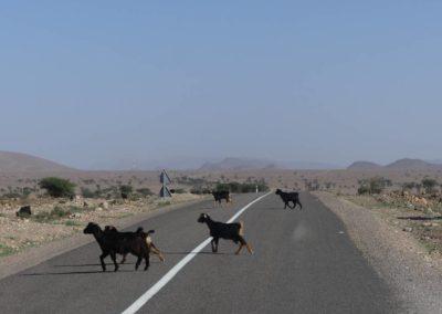 67. Route vers Aït Ben Haddou - Les Mollalpagas en cavale (4)
