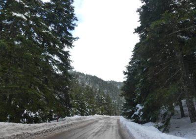 101. Route vers Osios Loukas - Les Mollalpagas en cavale (35)