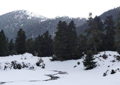 101. Route vers Osios Loukas - Les Mollalpagas en cavale (37)