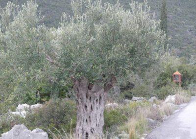 90. Route vers Mycènes - Les Mollalpagas en cavale (26)