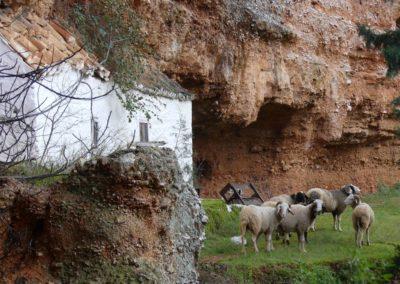 94. Didyma - Les Mollalpagas en cavale (31)