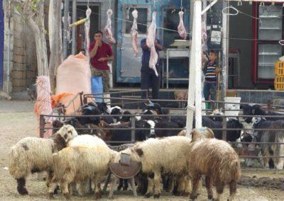 138. Chiraz - Les Mollalpagas en cavale (336)