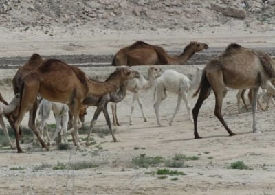140. Qeshm - Les Mollalpagas en cavale (684)