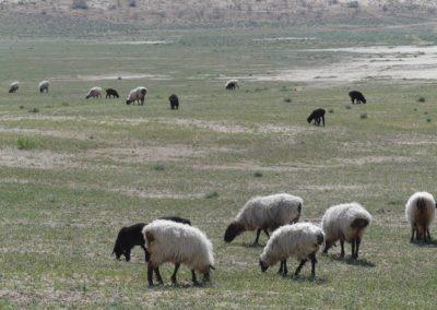 153. Turkménistan - Les Mollalpagas en cavale (357)