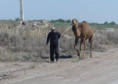 153. Turkménistan - Les Mollalpagas en cavale (441)