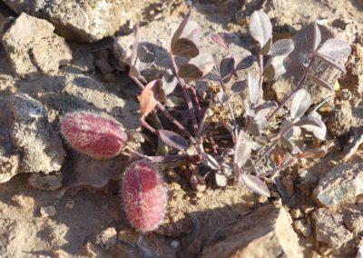 157. Forteresses du désert - Les Mollalpagas en cavale (123)