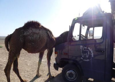 157. Forteresses du désert - Les Mollalpagas en cavale (60)