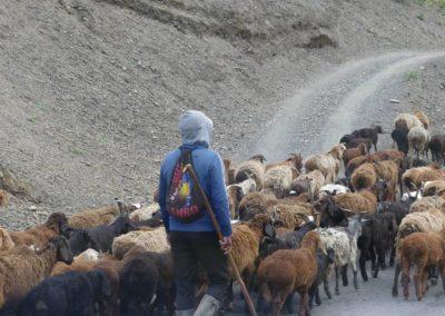 163. de la frontière à Hulbuk - Les Mollalpagas en cavale (25)