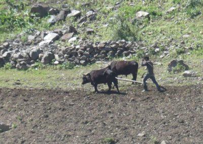 166. M41 de Kalaikum à Khorog - Les Mollalpagas en cavale (35)