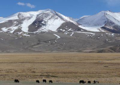 168. M41 de Khorog à Murghab - Les Mollalpagas en cavale (288)