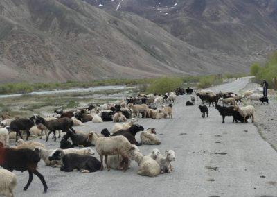 168. M41 de Khorog à Murghab - Les Mollalpagas en cavale (31)