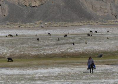 168. M41 de Khorog à Murghab - Les Mollalpagas en cavale (345)