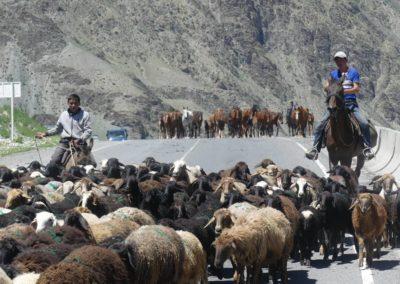 170. Route vers Osh - Les Mollalpagas en cavale (102)