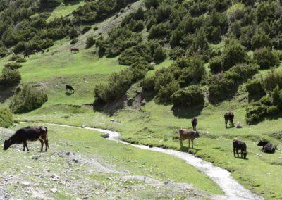 170. Route vers Osh - Les Mollalpagas en cavale (34)