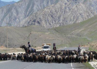 170. Route vers Osh - Les Mollalpagas en cavale (77)