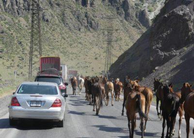 172. Route vers Bishkek - Les Mollalpagas en cavale (39)