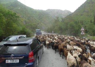 172. Route vers Bishkek - Les Mollalpagas en cavale (67)