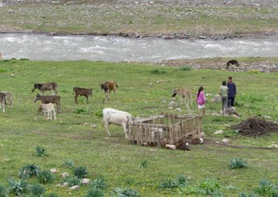 172. Route vers Bishkek - Les Mollalpagas en cavale (84)