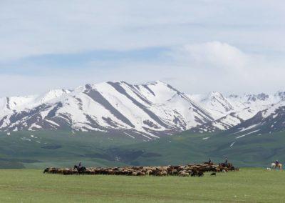172. Route vers Bishkek - Les Mollalpagas en cavale (93)