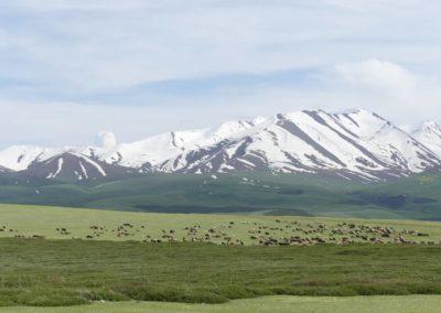 172. Route vers Bishkek - Les Mollalpagas en cavale (95)