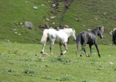 175. Issyk Kul - Les Mollalpagas en cavale (511)