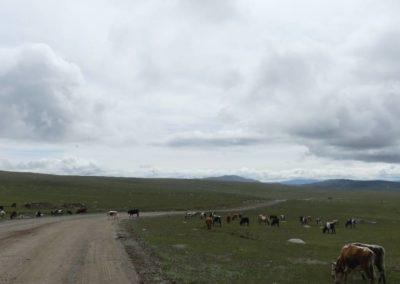 181. Route vers Olgi - Les Mollalpagas en cavale (17)