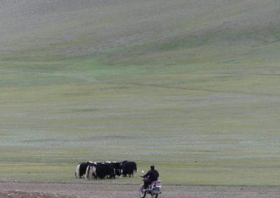 181. Route vers Olgi - Les Mollalpagas en cavale (31)