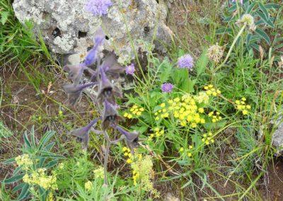 193. T3 Gorges de Chuluut - Les Mollalpagas en cavale (30)