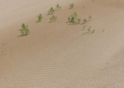 198. Dunes d'Elsen Tasarkai - Les Mollalpagas en cavale (39)